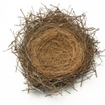 bird's nest against white background