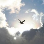 eagle soaring through clouds