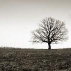 single tree on plain