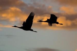 Two birds soaring