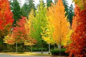 large_your-photos-colorful-trees