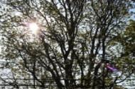 1-tree-with-sun-IMG_0412