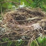 nest is empty